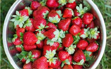 Conditionnement fraises