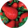 Miniature fraises